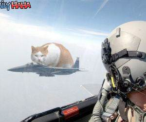 Stealth Cat Fighter
