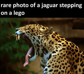 stepped on a lego ... 2