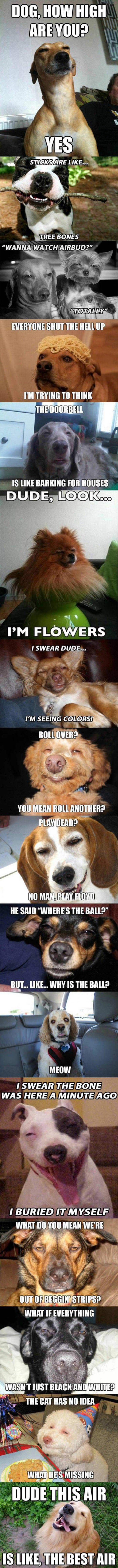 stoner dogs funny picture