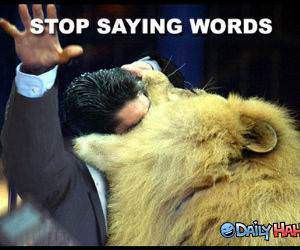 Stop Saying Words Lion Pic