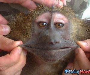 Stretchy Smile Monkey