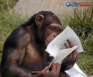 Studying Monkey