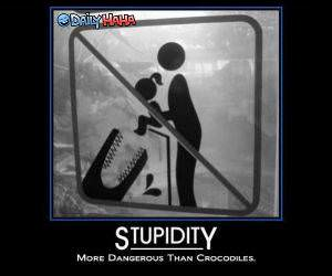 Stupidity is Dangerous Funny Picture