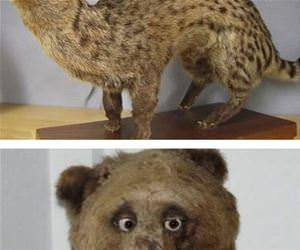 taxidermy gone wrong funny picture