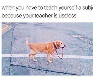 teacher is useless