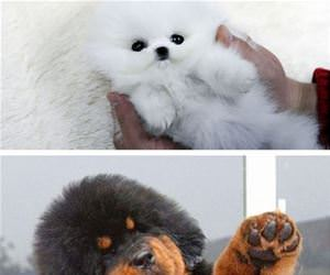 teddy bear dogs funny picture