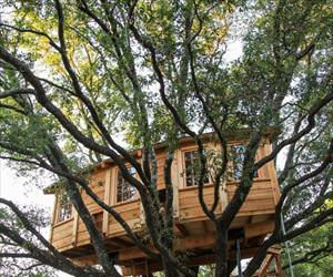 that is a cool tree house