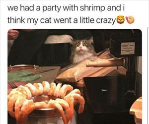 that shrimp looks amazing