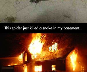 that spider just killed a snake funny picture