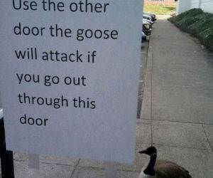 The Attacking Goose funny picture