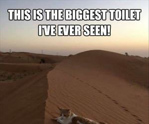 the biggest toilet ever