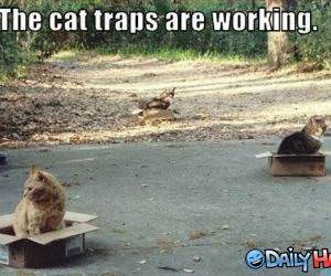 Cat Traps funny picture