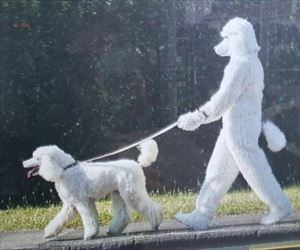 the dog dog walker