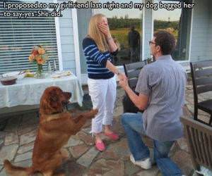 The Dog Helped funny picture