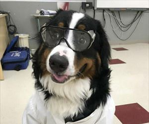 the dogtor