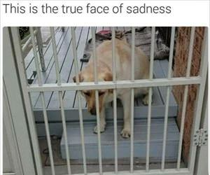 the face of sadness