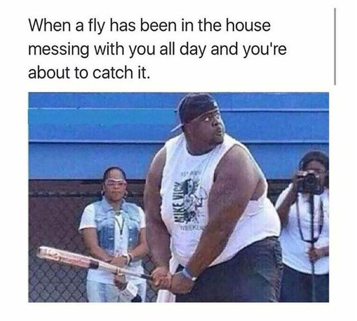 the fly is gunna get it