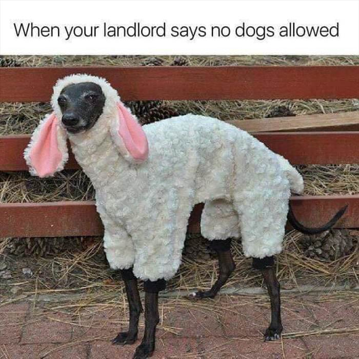 the landlord says no dogs allowed