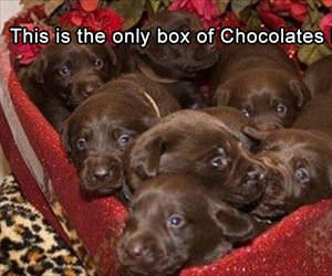 the only box of chocolates