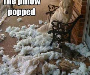 Pillow Popped funny picture