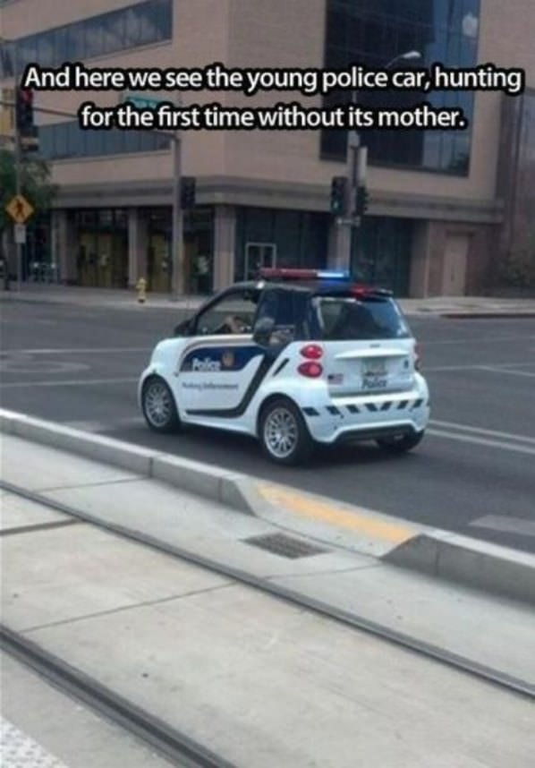 Young Police Car funny picture