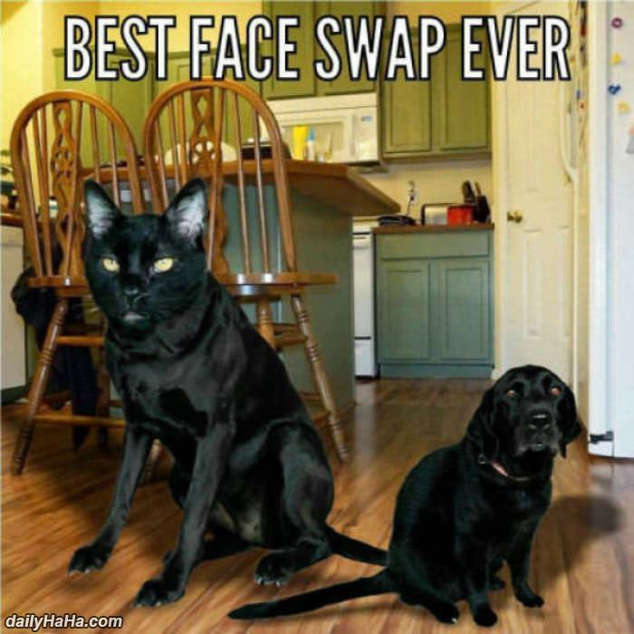 the best face swap ever funny picture