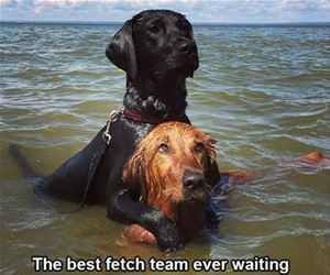 the best fetch team funny picture