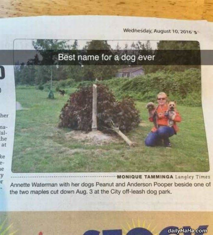the best name for a dog ever funny picture