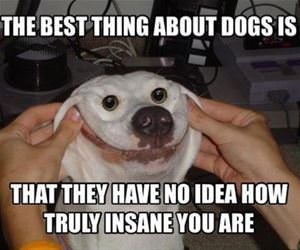 the best thing about dogs funny picture