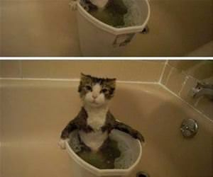 the cat bubble bath funny picture