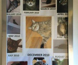 the cat of the month funny picture