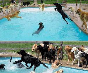 the doggy pool party funny picture