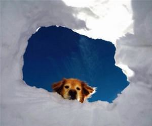 the entrance to heaven funny picture