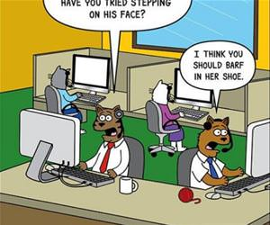 the feline support center funny picture