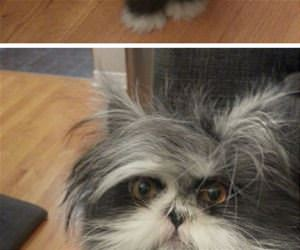 the furriest face ever funny picture