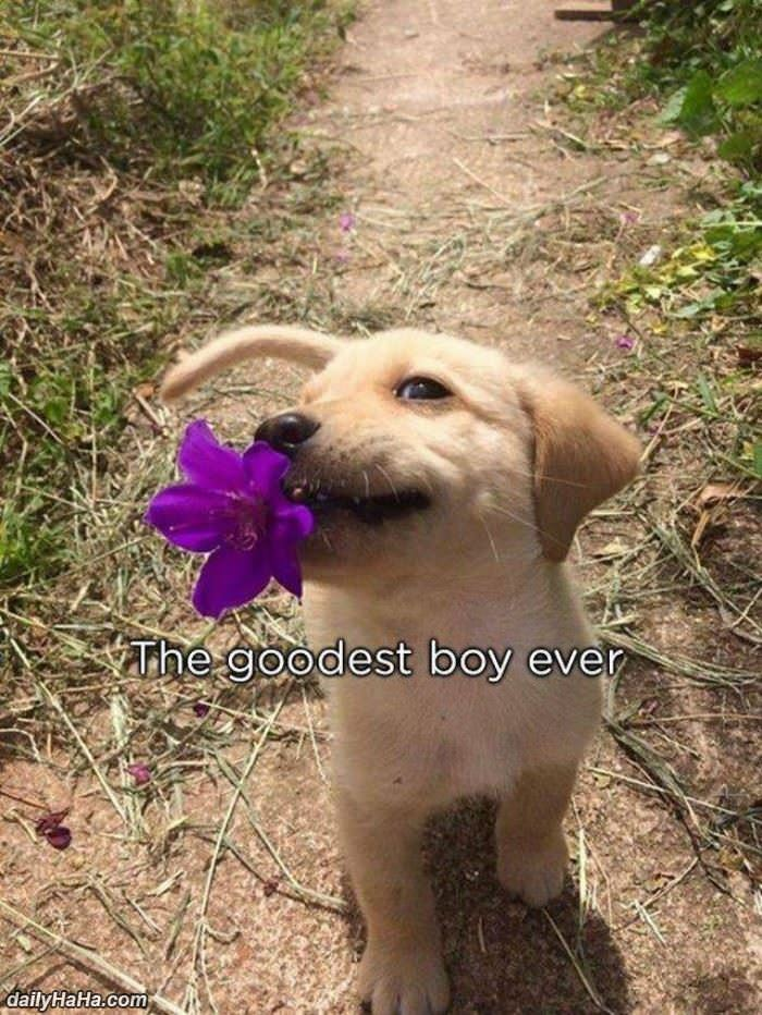the goodest boy ever funny picture
