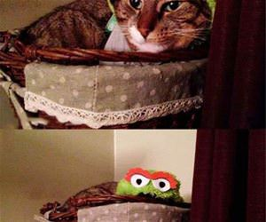 the grouch funny picture