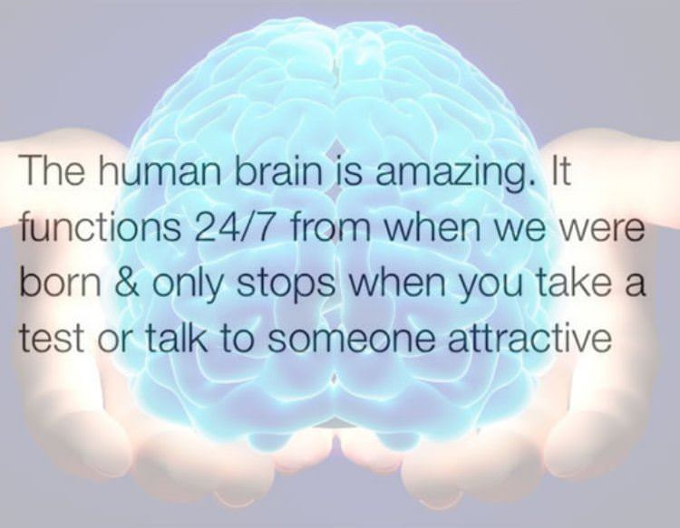 the human brain funny picture