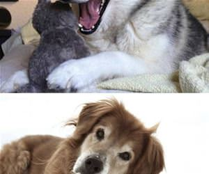 the pun dog funny picture