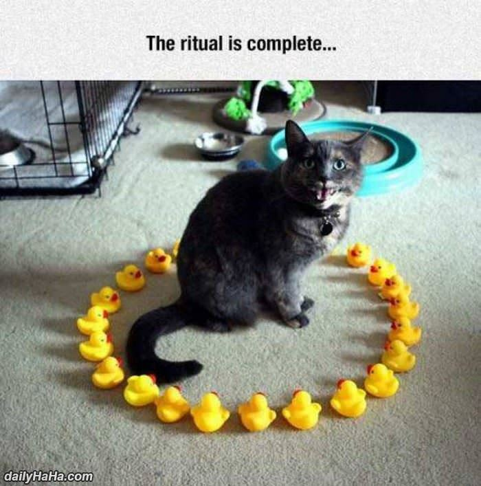 the ritual is complete funny picture