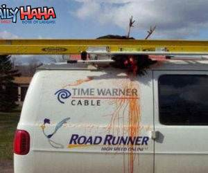The Road runner