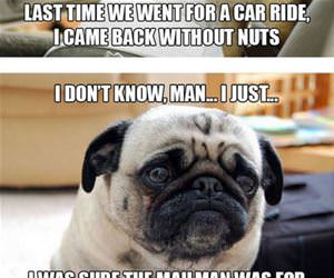 the sad pug funny picture