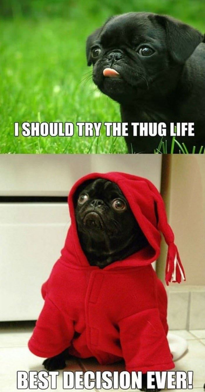 the thug life funny picture