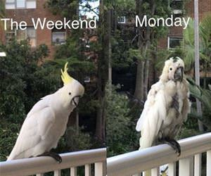 the weekend vs mondays funny picture