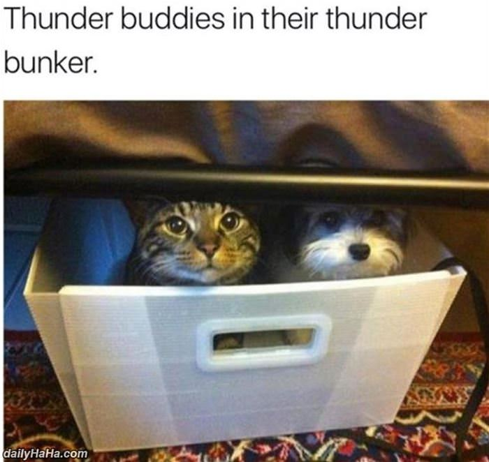 their thunder bunker funny picture