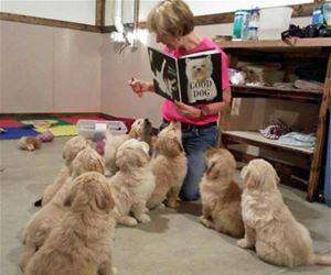 therapy dogs being trained funny picture