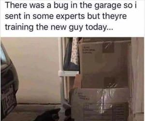there was a bug in the garage