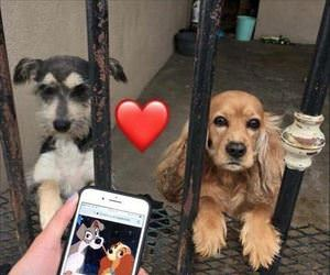 these dogs look familiar