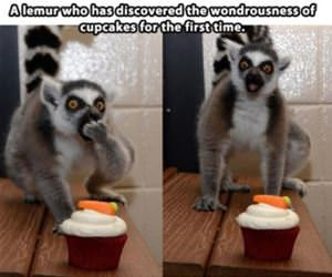 these cupcakes are amazing thanks funny picture