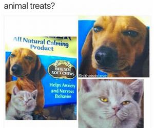 these special animal treats funny picture